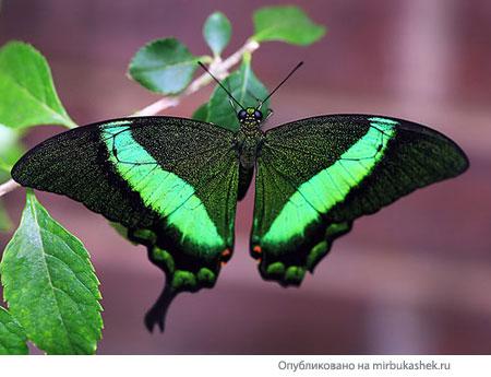 Неоновая бабочка