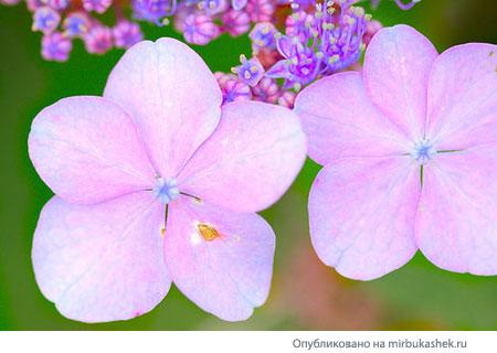 цветочки картинки: