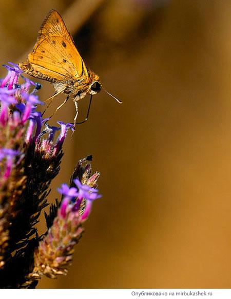 Бабочка на взлете
